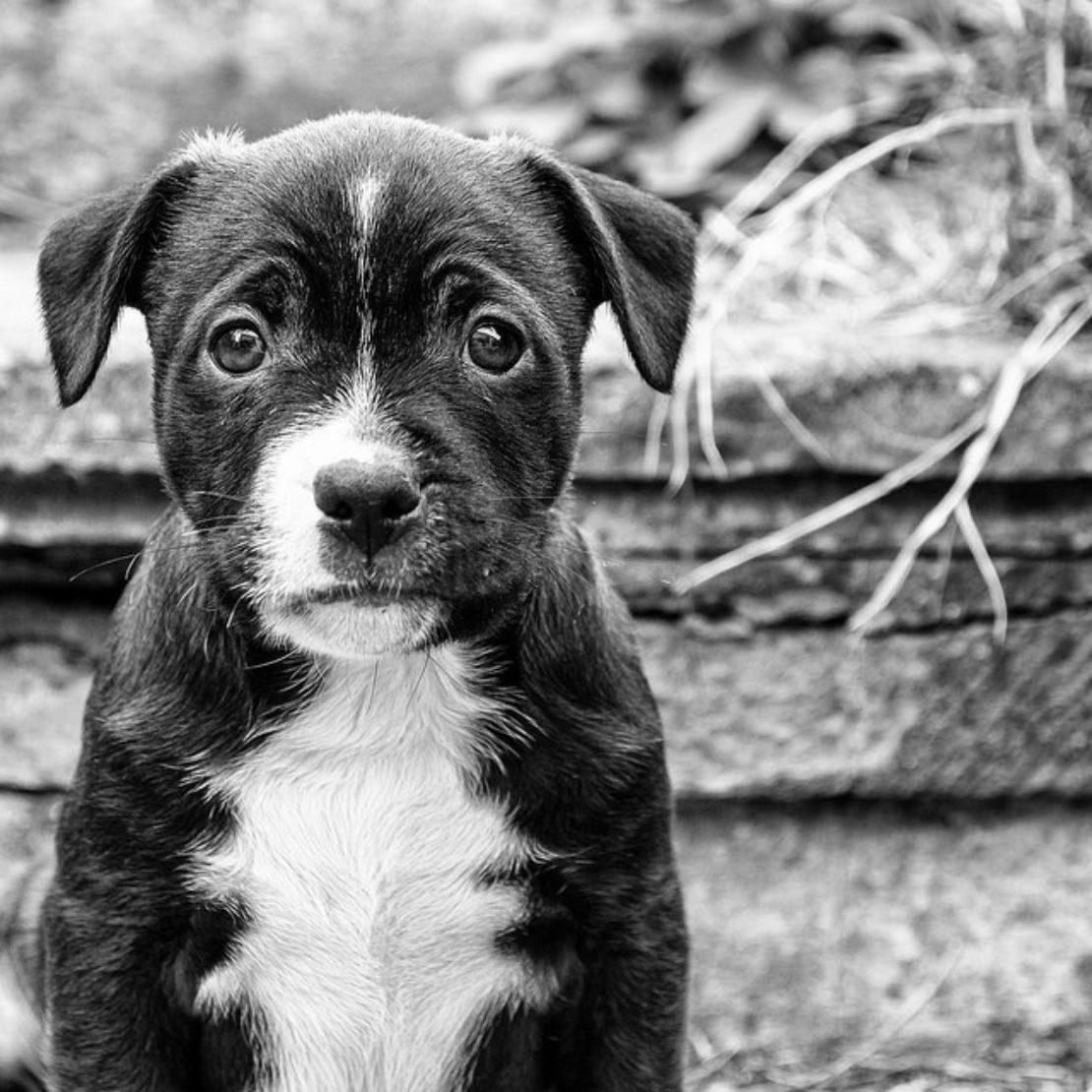 Sad-looking dog, by Stewart Black